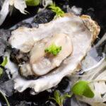 oyster magnarx+